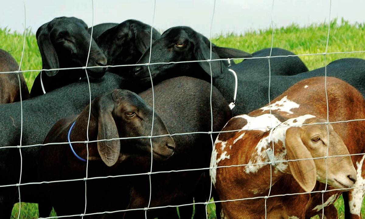 malla graduada para bovinos